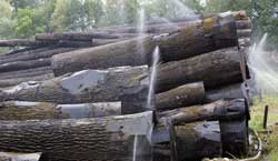 Watering the logs